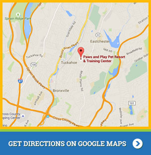 Paws and Play Map Location Google