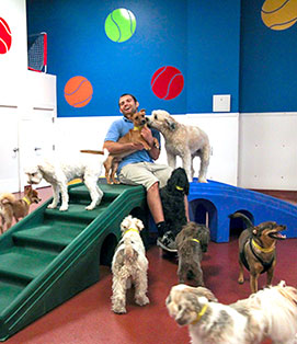 Paws and Play Dog Daycare Playtime