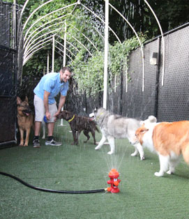 Paws and Play Dog Daycare Outdoor Playtime