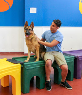 Paws and Play Dog Daycare Indoor Playroom