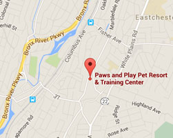 Paws and Play Location Map