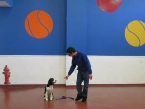 Paws and Play Dog Training Program