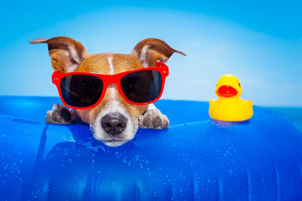 summer-fun-activities-for-dogs
