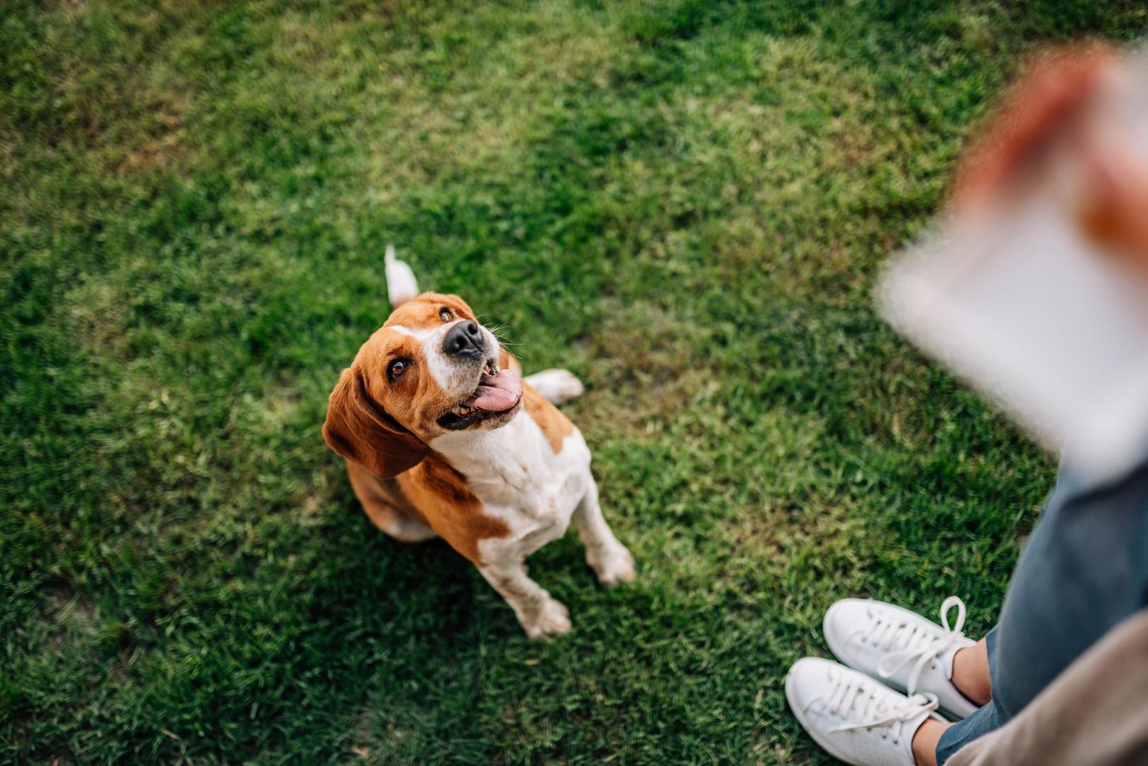 professional-dog-trainers
